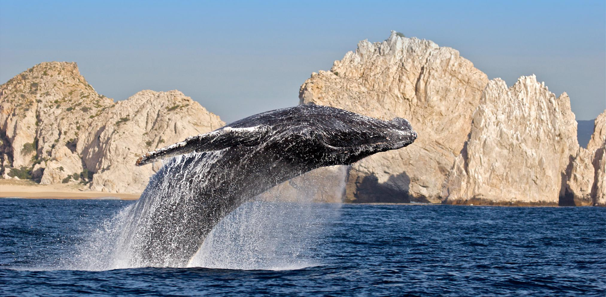 Visiting Los Cabos Five Things To Do Mexican Hotels And