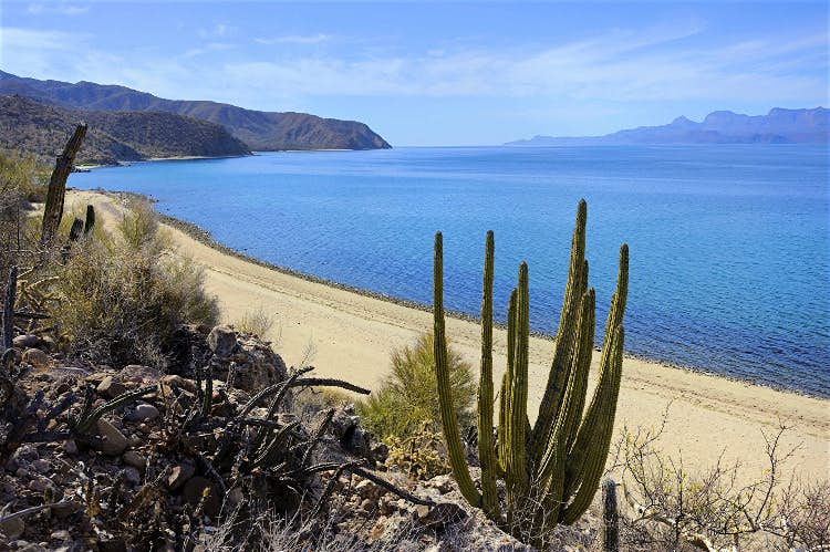 Baja california Sur Nature Best place to visit in Mexico MexVax mexican hotels and resorts
